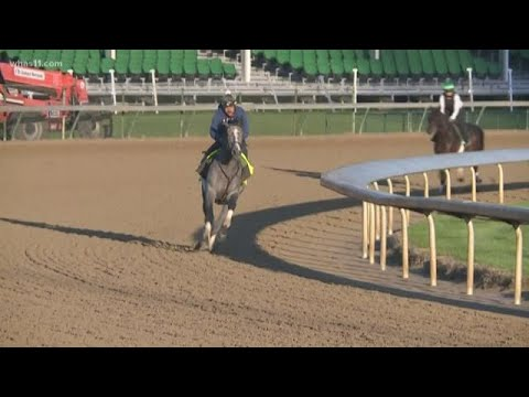 Tacitus Horse: Meet the Jockey, Owner & Trainer