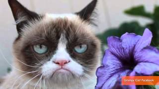 Repeat youtube video Grumpy Cat and Lil Bub Finally Meet