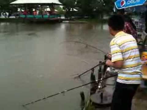 Câu cá Tra tại Thành Long