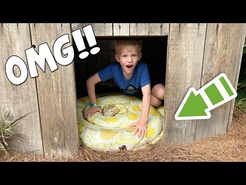 6-year-old-sneaks-into-python-cage!!!...and-then-this-happened