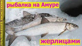 Рыбалка на Амуре жерлицами