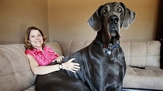 top 25 abnormally large animals you won t believe actually exist