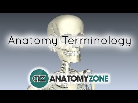 Anatomy Terminology - Anatomy Tutorial