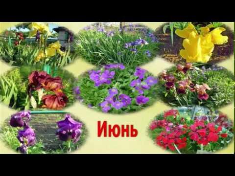 Поздравляю вас, садоводы, с летом, солнцем, с хорошей погодой! Не садоводов тоже поздравляю!.mp4