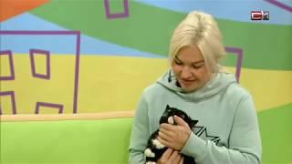 """Кошка с желтыми глазами К1391 в программе """"Вставай"""" на СТВ"""