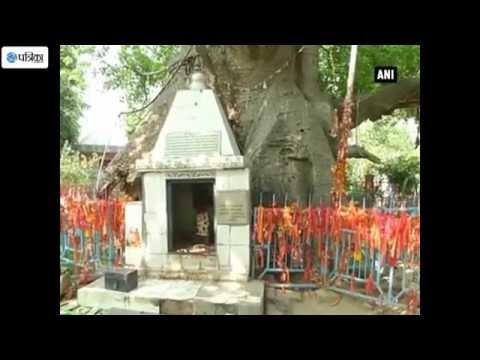 Oldest Tree Worshipped by Hindu Devotees in Barabanki(UP)