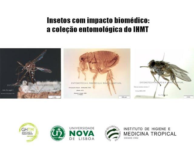 Insetos com impacto biomédico  a coleção entomológica do IHMT