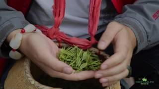 Желтый Чай гор Хошань. Провинция Аньхой. Весна 2017(, 2017-08-16T11:07:51.000Z)