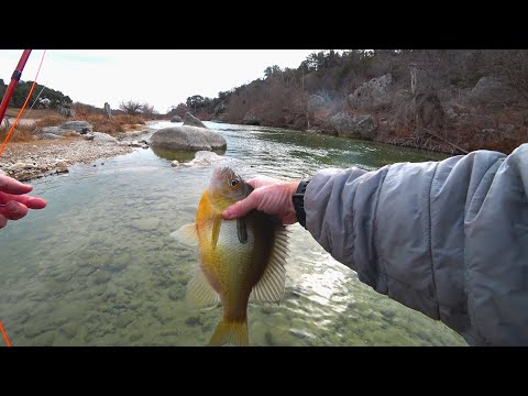 Many Sunfish On The Fly! - Fly Fishing San Antonio Texas - McFly Angler Fly Fishing Episode 74