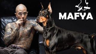 Mafya Çeteleri Tarafından En Çok Tercih Edilen 10 Köpek