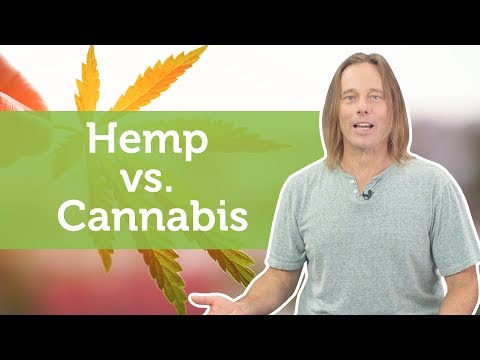 Hemp vs. Cannabis | What You Need to Know