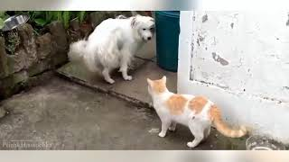 FUNNY ANIMALS DOGS CATS VIDEO - Funny Animals Funny Pranks Funny Fails #25