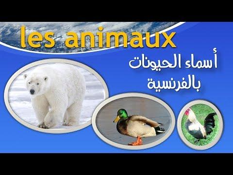 les animaux -  اسماء الحيونات باللغة الفرنسية