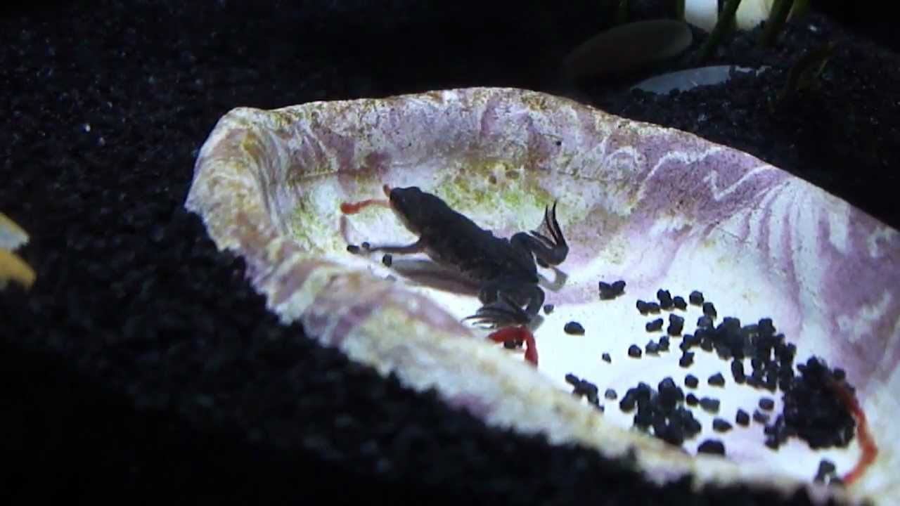 Adf Feeding Time Blood Worms Youtube