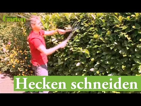 gartentipp hecken schneiden youtube. Black Bedroom Furniture Sets. Home Design Ideas