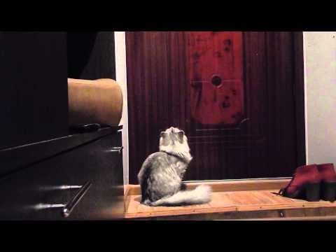 Вопрос: Как сделать, чтобы кот не просился на улицу?