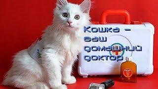 Кошка ваш домашний доктор