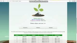 денежное дерево обзор проэкта без вложений 2017