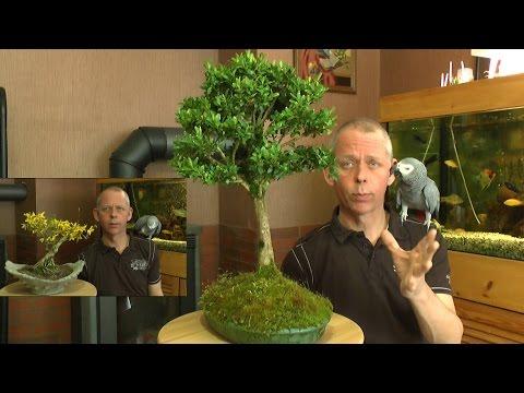 buxus vermehrung buchsbaum ganz einfach selber heranzi doovi. Black Bedroom Furniture Sets. Home Design Ideas