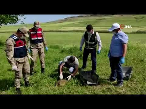 Mehmetçik, nesli tükenme tehlikesinde olan Fırat Kaplumbağasına hayat oldu