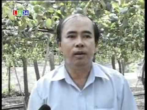 Nhanonglamgiau.com - Trồng táo xanh trên giàn