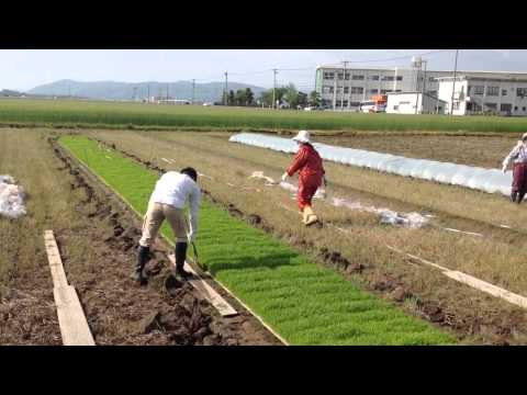 Japanese family farms. A model for the West?