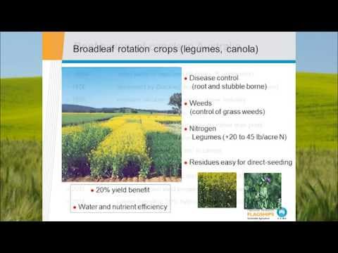 Canola and Its Role in Australia's Conservation Farming Revolution