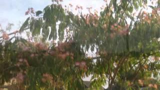 Приморский, Феодосия-2011 г. Часть 2(, 2011-09-03T18:05:42.000Z)