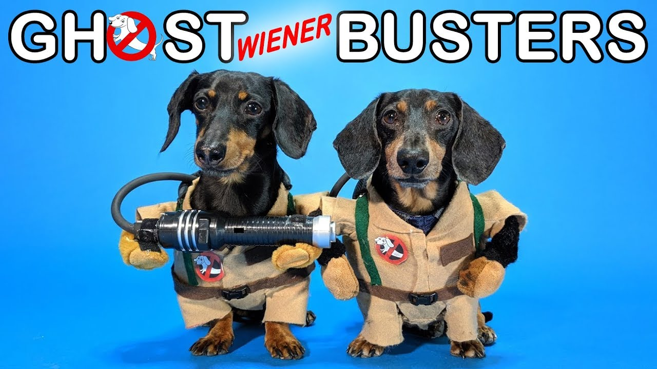 Download Ep #4: GHOSTWIENERBUSTERS - (Funny, & Spooky Dog Video for Halloween!)