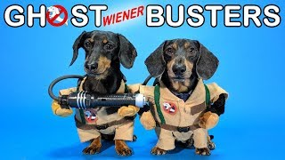 Ep #4: GHOSTWIENERBUSTERS  (Funny, & Spooky Dog Video for Halloween!)