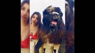 世界でトップ10の犬|アラバイ ... 世界でトップ10の犬 最大10匹の犬 最...