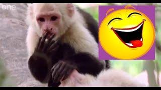 BBC FUNNY TALKING ANIMALS HINDI