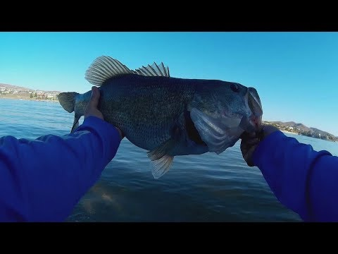 Socal Bass Fishing, Missile Bait Destroyer,
