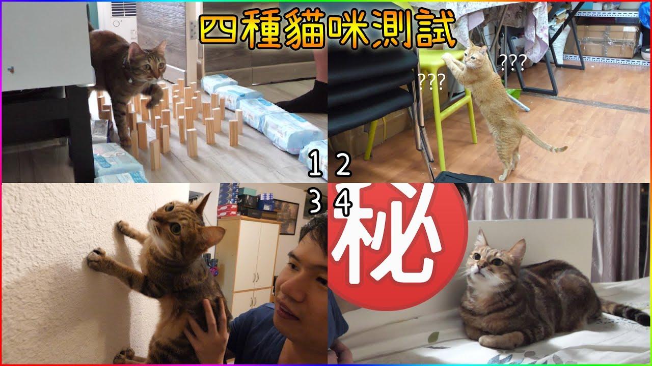 貓咪是否聰明/信任你嗎? 四種貓咪測試~
