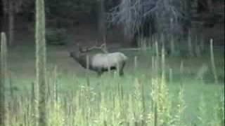 Arizona Archery Bull Elk Hunt DIY