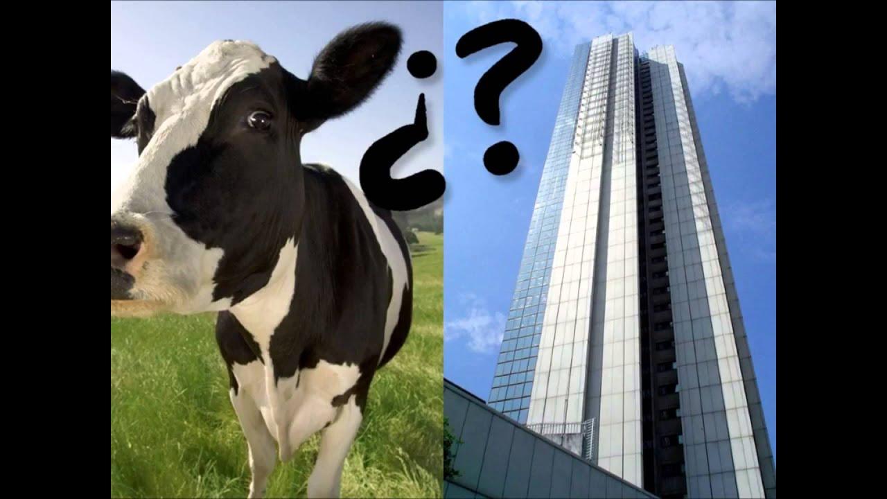 En qué se parece una vaca a un edificio - Aquí soy Chino