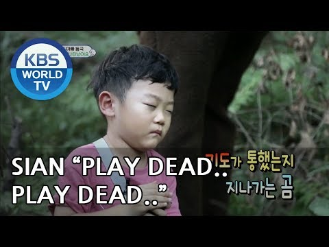 """SIAN plays dead in front of a """"bear"""" [The Return of Superman/2018.08.26]"""