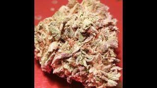 Mon Cannabis Zombie Zkittlez de Ripper Seeds