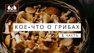 Кое-что о грибах. Первая серия
