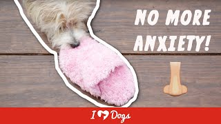 How To Prevent Separation Anxiety For Dogs | Stinky Slippers