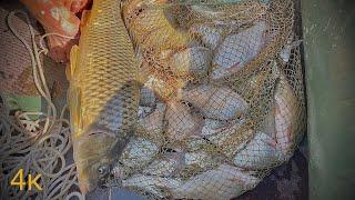 Яйца рулят на реке Рыбалка на Ахтубе 2021