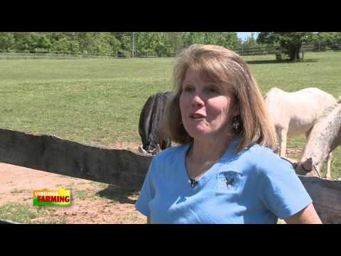 Wings Of Hope Equine Facility