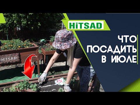 Что посадить в ИЮЛЕ ✔️ 100% Урожай ✔️ Советы от Хитсад ТВ