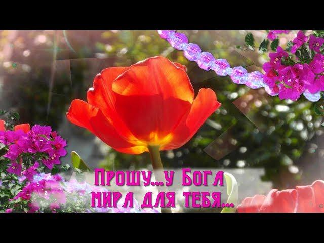 Смотреть видео Прошу... у Бога счастья для тебя...