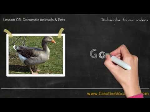 Domestic Animals & Pets Vocabulary Picture Video Lesson -  Learn List of Domestic Animals & Pets - 5