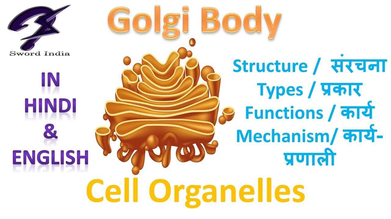cell organelles golgi body structure function cbse class 9