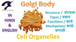 Cell Organelles -Golgi Body | Structure & Function | Cbse Class 9 | In Hindi & English