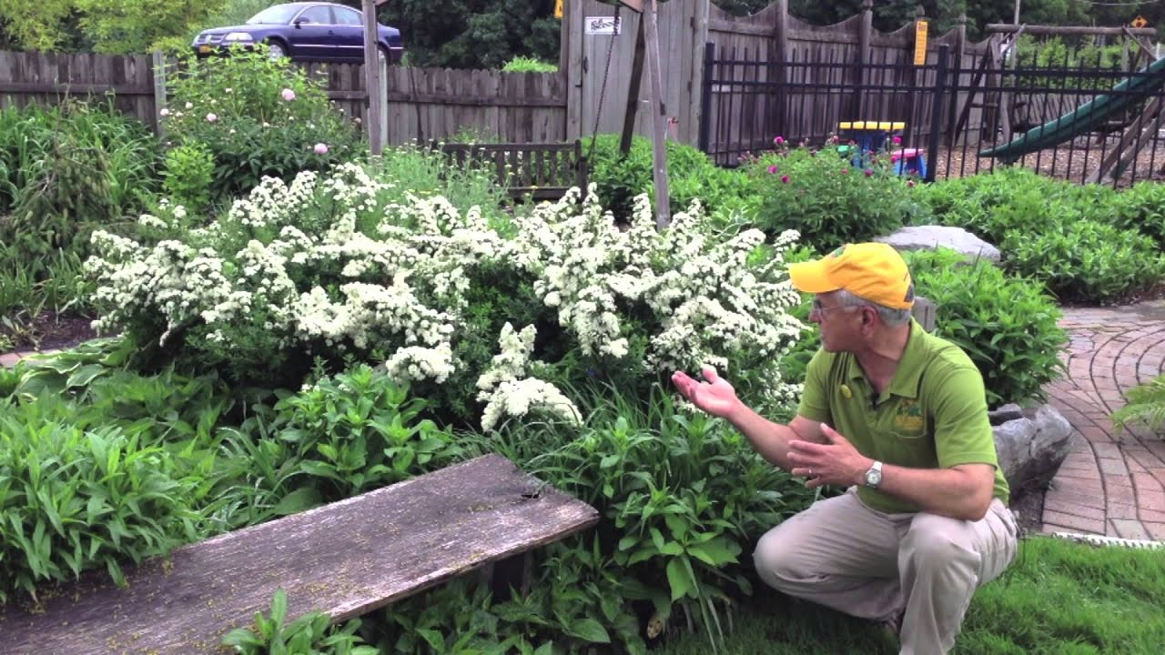Perinneal Deer Resistant Landscape Design Gardening Flower And