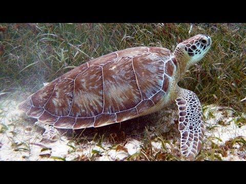 Snorkeling Hol Chan Marine Reserve | Belize