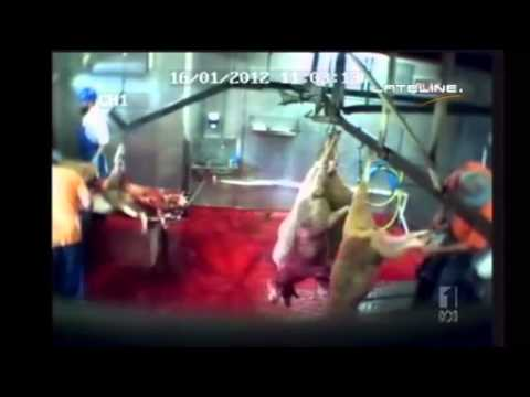 NSW Abattoir Closed Over Slaughter Practices